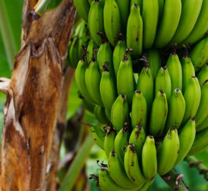 Tropic Biosciences raises $28.5 million Series B